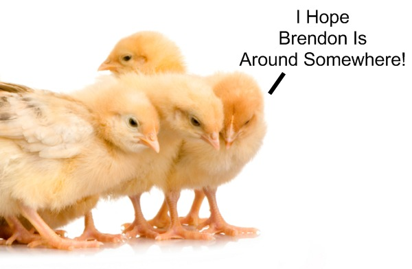 It's okay little chickens, Brendon will save you!