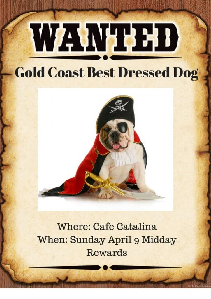 Who was Top Dog at Cafe Catalina?